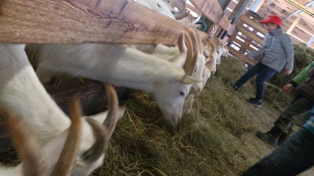 Exkursion zum Bio-Bauernhof, Schulde des Essens, Bio 3.0, #biodreinull, Ziegen