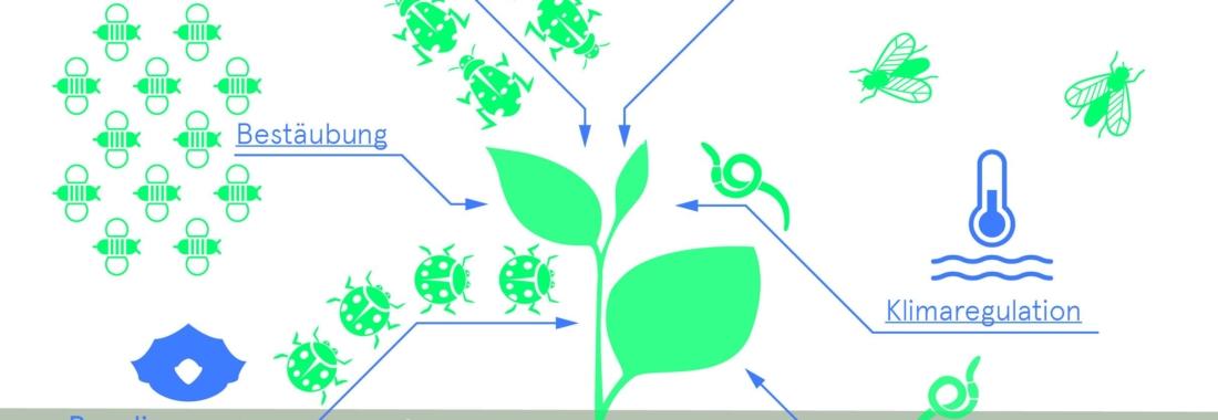 Biodiversität, Vielfalt, Bio 3.0, #biodreinull, Wissensvisualisierung, FiBL, dform, SCR