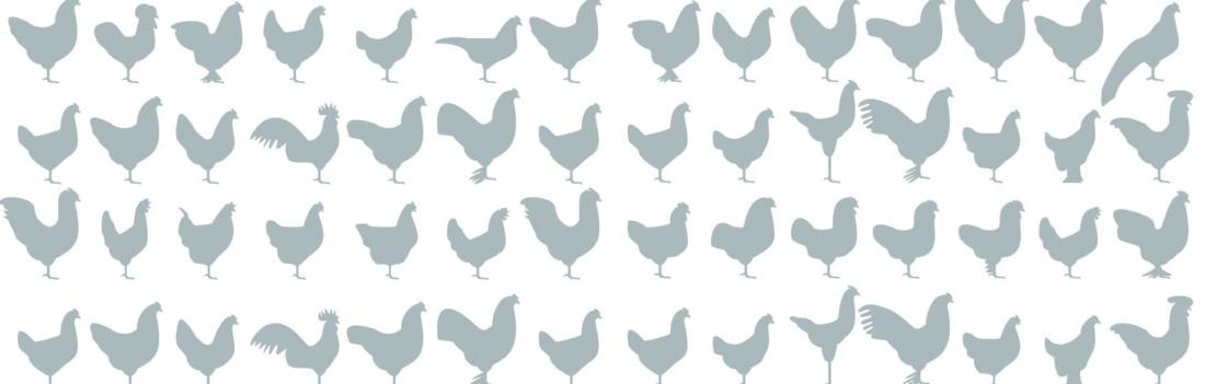 Gefährdete Nutztierrassen, Bio 3.0, #biodreinull, Wissensvisualisierung, FiBL, dform, SCR