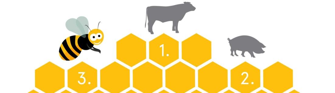 Bienen, Bio 3.0, #biodreinull, Wissensvisualisierung, FiBL, dform, SCR