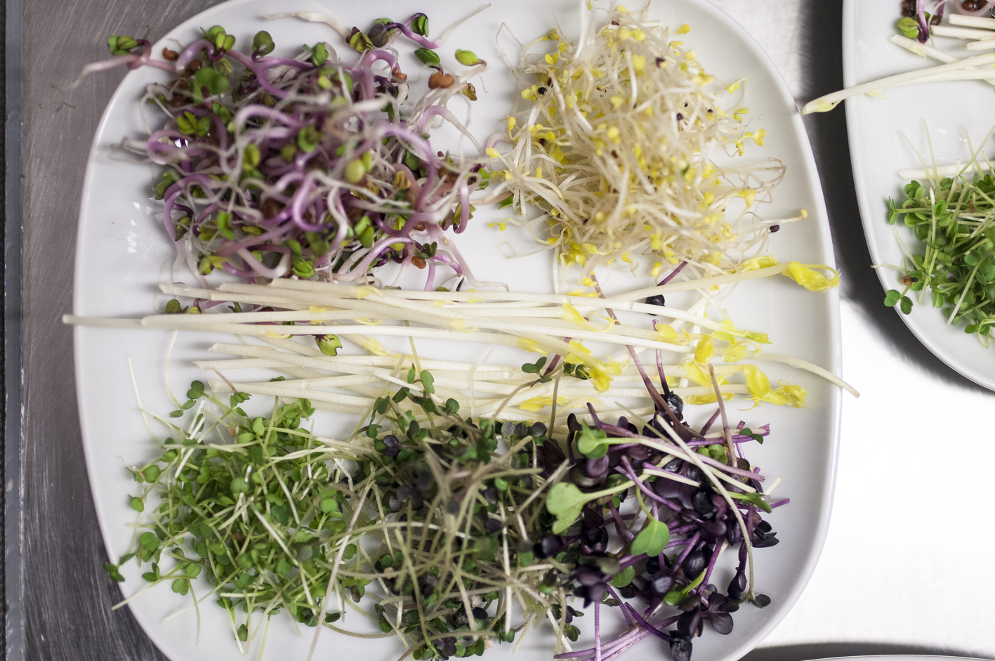 Bio-Superfood Bio-Sprossen Verkostung Tasting_forum Bio 3.0 biodreinull