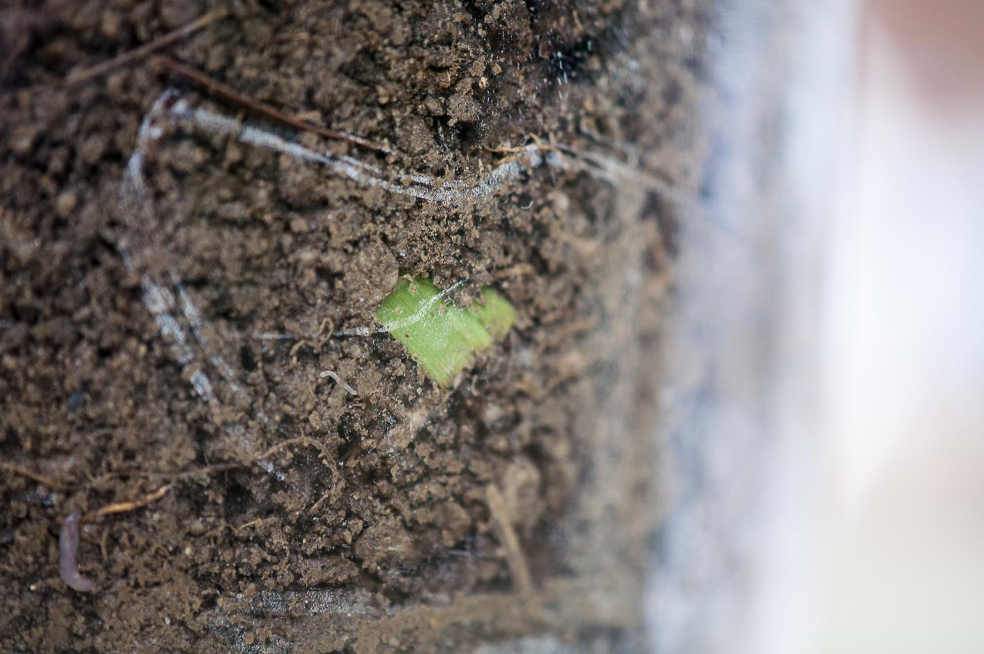 Tasting_forum Kostbarer Boden Bio-Boden Bio-Wein Bodeneluat Verkostung Bio 3.0 #biodreinull Biolandgut Esterhazy Donnerskirchen