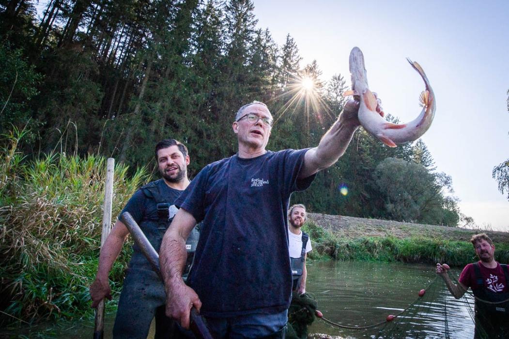Ab-Fisch Abfischen Hecht Verkostung Tasting_forum Biofisch Waldviertel Marc Mößmer Bio 3.0 #biodreinull