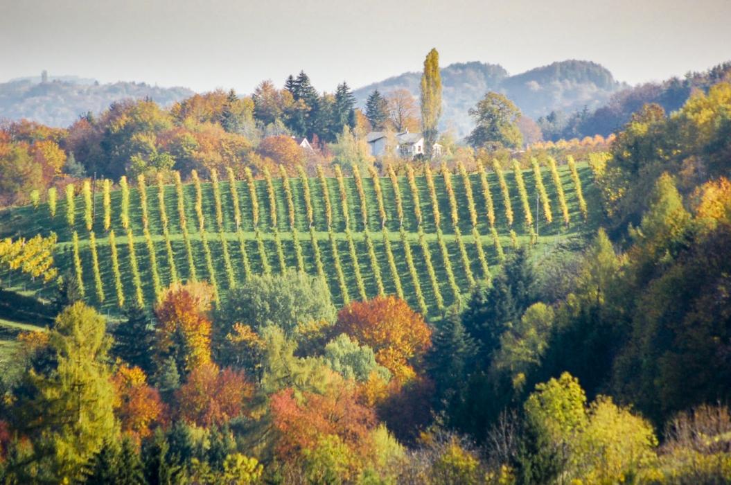 Bio-Wein Tasting_forum Verkostung Bio3.0 #biodreinull Steiermark