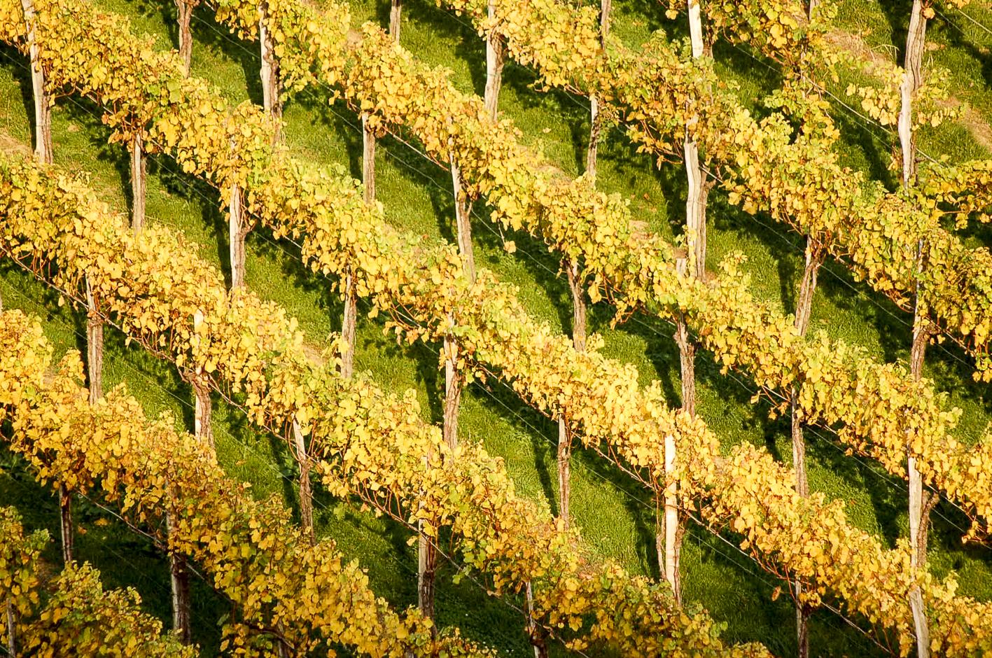 Bio-Wein Tasting_forum Verkostung Bio3.0 #biodreinull
