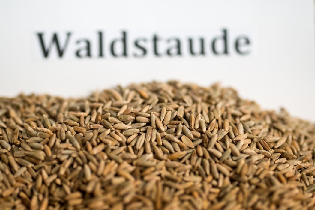 Bio-Mehl- und -Backworkshop Bio 3.0 Tasting_forum Verkostung #biodreinull Dyk-Mühle 1. Waldstaude Waldviertler Biobackschule